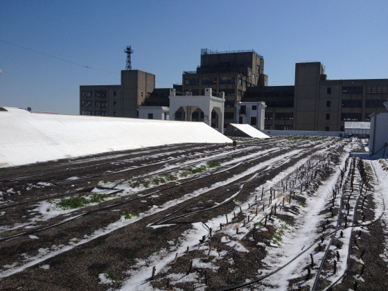 The Brooklyn Grange Navy Yard farm frosted over.