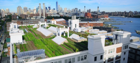 Photo: Brooklyn Grange